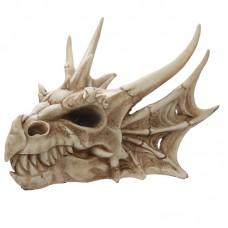 Medium Drachenschädel